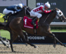 Line of Vision and jockey Luis Contreras winning the Eternal Search Stakes on August 5 at Woodbine Racetrack.