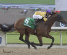 Wyatt's Town and jockey Eurico Rosa Da Silva winning the King Corrie Stakes on July 28 at Woodbine Racetrack.