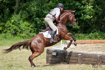 Phillips says Mike may have a future in the upper levels of eventing. Photography by Bailini