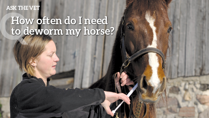 Thumbnail for How Often do I Need to Deworm My Horse?