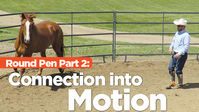 Thumbnail for Meaningful Round Pen Training – Part 2