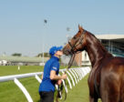 Hawkbill, pictured at Woodbine last year leading up to Woodbine Mile weekend. Brittney Mayotte Photo