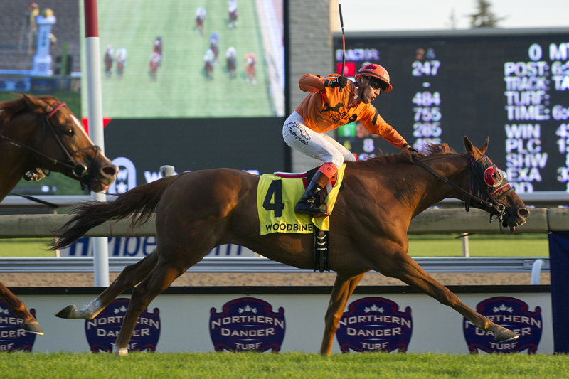 Thumbnail for Pattison Canadian International to headline a stellar stakes program at Woodbine