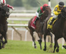 Sean and Dorothy Fitzhenry's Mr Havercamp will contest the $800,000 Ricoh Woodbine Mile.