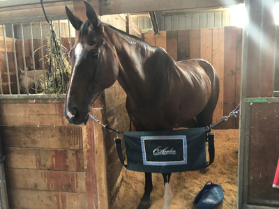 Woody, in his stall at Bromont.