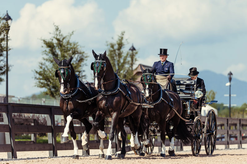 Australia's Boyd Exell with his dreamteam of horses, Carlos, Celviro, Checkmate, Zindgraaf put themselves in top position after the first phase of the Polaris RANGER Driving Dressage at the FEI World Equestrian Games™ Tryon 2018. Photo by FEI/Christophe Taniere