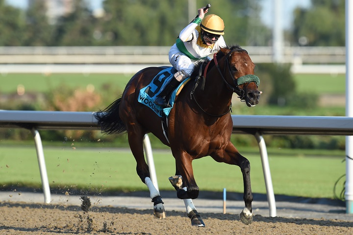 Yorkton takes the Bold Venture Stakes under jockey Jesse Campbell for owner Chiefswood Stable.