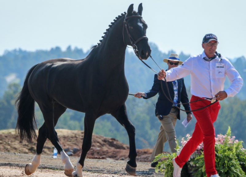 All horses pass the Polaris RANGER Driving horse inspection today eager to get things underway for the Driving Dressage tomorrow at the FEI World Equestrian Games™ Tryon. Photo ©Tryon