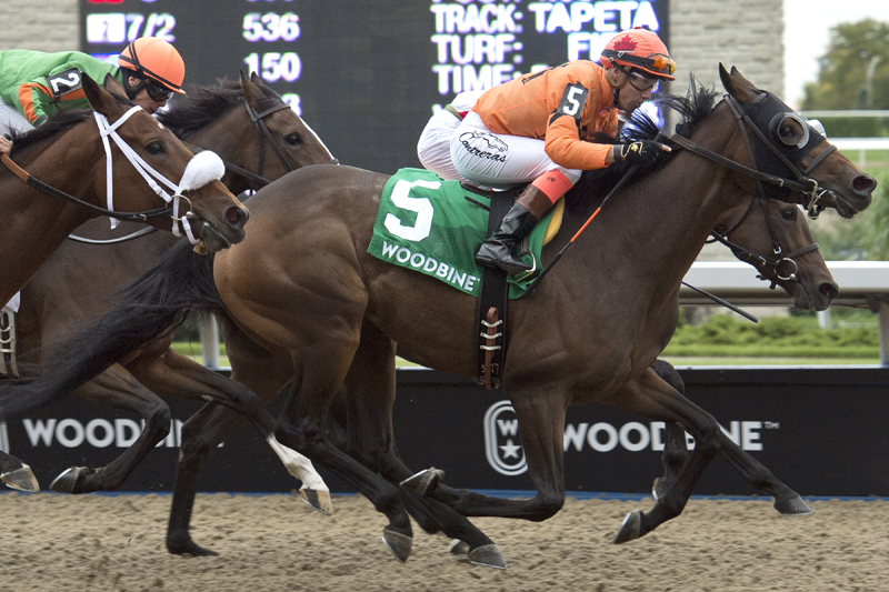 Bear Paw (#5) and jockey Luis Contreras winning the $100,000 Classy 'n Smart Stakes on Sunday, Sept. 30 at Woodbine Racetrack.