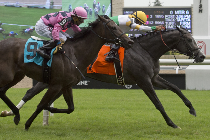 Bold Script, with Eurico Rosa Da Silva aboard, winning on July 14 at Woodbine Racetrack.