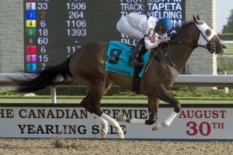 Code Warrior winning the Grade 3 Seaway Stakes on August 26 at Woodbine Racetrack.