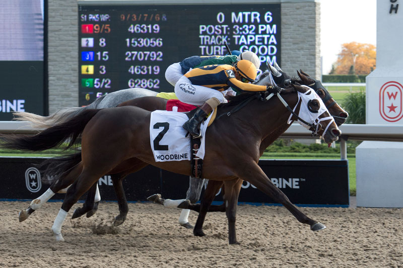 Devine Mischief (#2) and jockey Luis Contreras winning the $100,000 Ruling Angel Stakes on Sunday, Oct. 14 at Woodbine Racetrack. Michael Burns Photo
