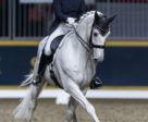 Jacqueline Brooks will retire her long-time partner, D Niro, in a moving ceremony on Tuesday evening, November 6, at the Royal Horse Show in Toronto, ON. Photo by Ben Radvanyi Photography