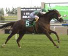 English Illusion and jockey Rafael Hernandez winning the OLG Halton Stakes on August 29 at Woodbine Racetrack..