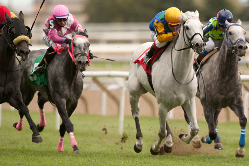 Gray Phantom (#1) and jockey Kazushi Kimura winning the $50,000 Grey Handicap on Sunday, Oct. 21 at Woodbine Racetrack. Michael Burns Photo