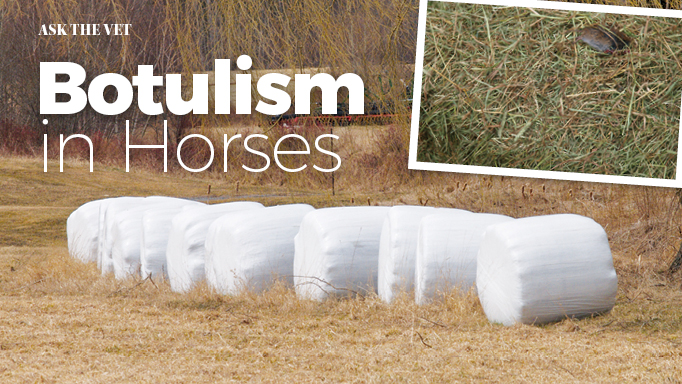 Thumbnail for Botulism in Horses
