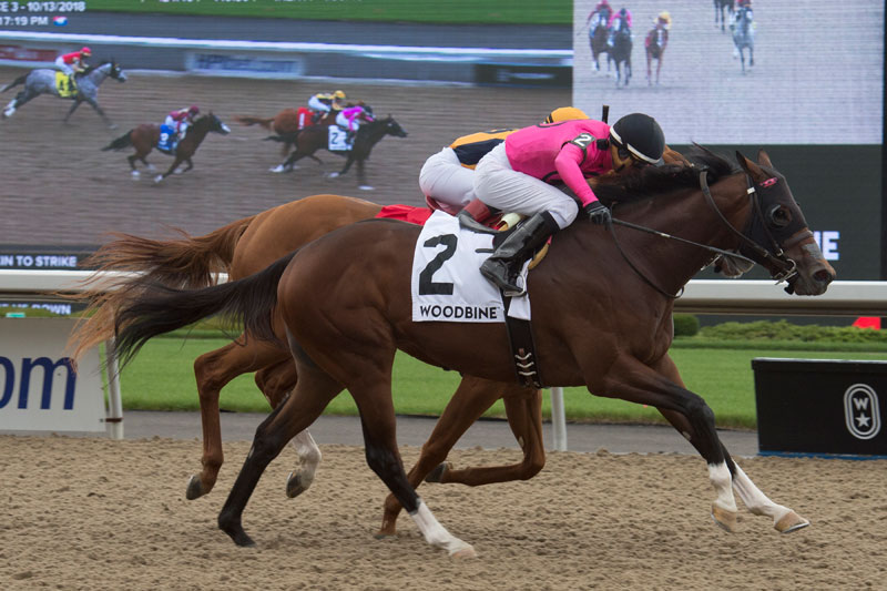 PHOTO: Lookin to Strike, in rein to jockey Gary Boulanger, winning the $125,000 Ontario Derby (Grade 3) over fellow Mark Casse trainee Curlin's Honor on Saturday, Oct. 13 at Woodbine Racetrack. Michael Burns Photo