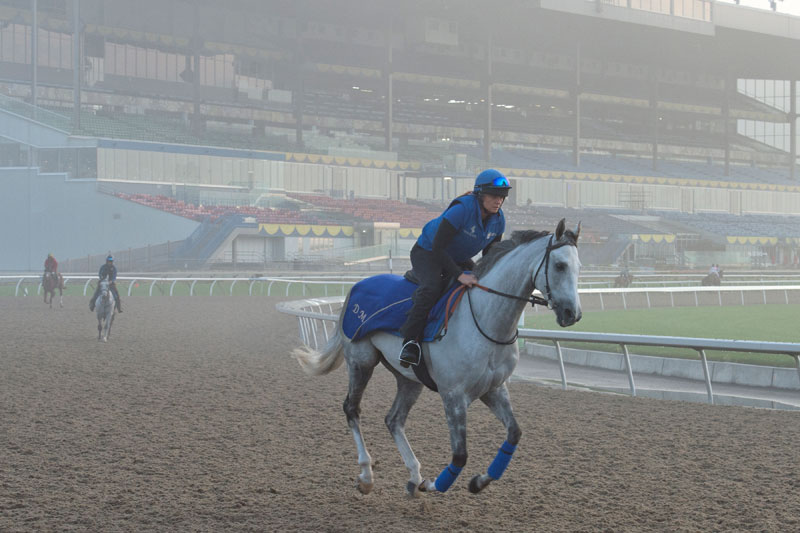 Thundering Blue prepping for the Pattison Canadian International, set for Saturday, Oct. 13, at Woodbine Racetrack. Michael Burns Photo