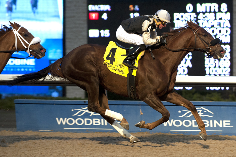 Gigantic Breeze winning the 2017 Autumn Stakes at Woodbine Racetrack.