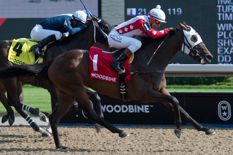Line of Vision and jockey Luis Contreras winning the Eternal Search Stakes on August 5 at Woodbine Racetrack. Michael Burns Photo