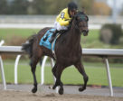 Mr Havercamp and jockey Eurico Rosa Da Silva winning the $175,000 Autumn Stakes (Grade 2) Saturday, Nov. 3 at Woodbine Racetrack.
