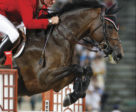 Equestrian Canada extends sincere condolences to the entire team behind Ole, an iconic Olympic horse for the Canadian Show Jumping Team who passed away at the age of 22 on Nov. 23, 2018 following a long and happy retirement. Photo © Cealy Tetley - www.tetleyphoto.com