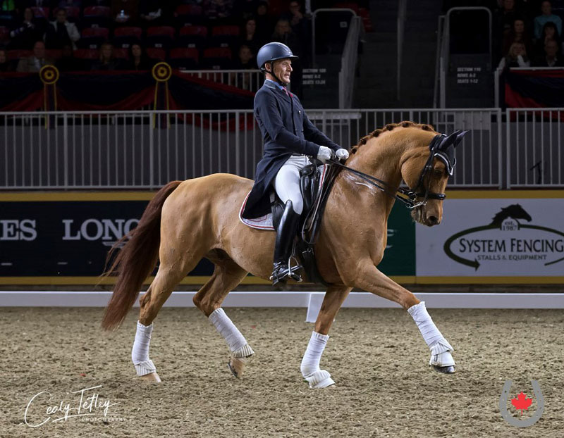 Canadian veteran Tom Dvorak won his first round of the Dressage Derby aboard Adajio, owned by Sue Schramayr and trained by Esther Mortimer of the Guatemalan Dressage Team. Photo © Cealy Tetley – www.tetleyphoto.com