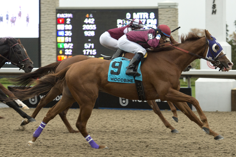 Thor's Rocket and jockey Alan Garcia winning the $100,000 Overskate Stakes on October 27 at Woodbine Racetrack.