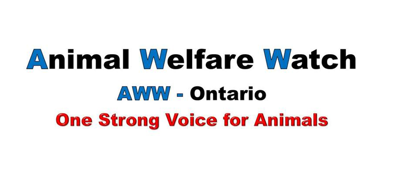Thumbnail for Animal Welfare Watch Group Launched in Ontario