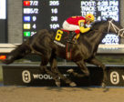 Kingsport and jockey Luis Contreras winning the $100,000 Sir Barton Stakes on Sunday, Dec. 2 at Woodbine Racetrack.