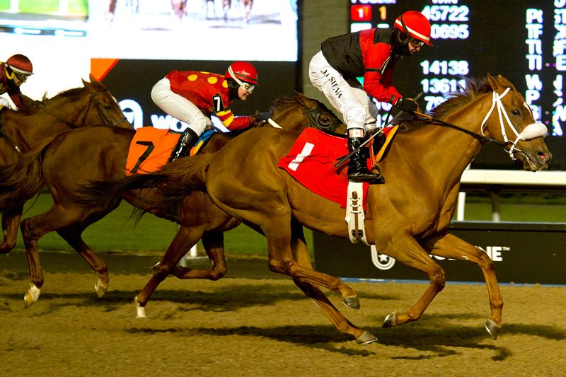 Melmich winning on November 10 at Woodbine Racetrack. Michael Burns Photo