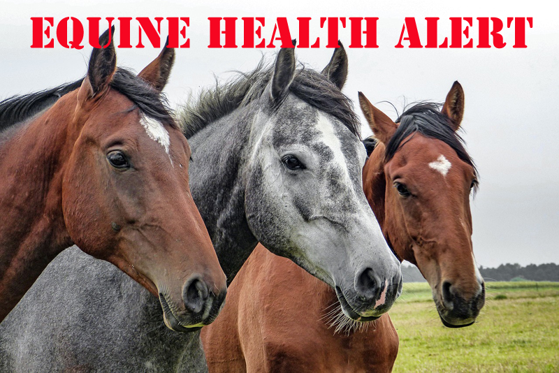 An Equine Infectious Anemia (EIA)-affected premises has been identified in the province of British Columbia.