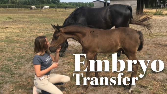 Thumbnail for Embryo Transfer is a Great Reproductive Option