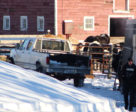 Sixty-five horses and six dogs were removed from Patricia Lynn Moore's property near Edmonton, Alberta on January 8, 2019.