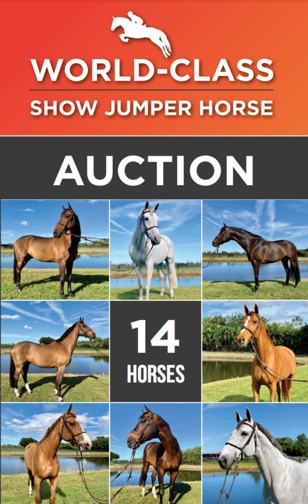An online auction of 14 horses owned by Alejandro Andrade, father of top show jumping competitor Emanuel Andrade, is set for February 19-26 in Florida.