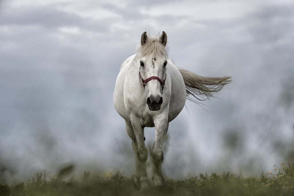 Equine herpes viral abortion is caused by equine herpesvirus-1 (EHV-1). Pregnant mares should be housed separately from other horses to ensure their protection.