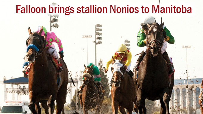 Thumbnail for New Manitoba Stallion Nonios