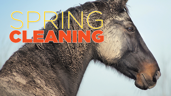 Thumbnail for Springtime Horse Grooming Tips