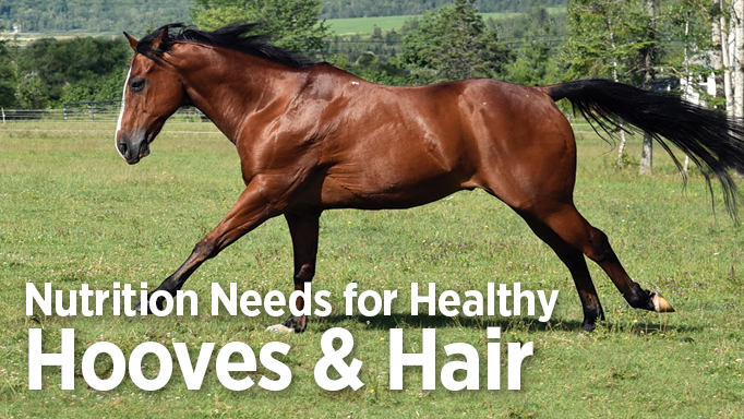 Equine Nutrition Needs for Healthy Hooves and HairHorse Canada