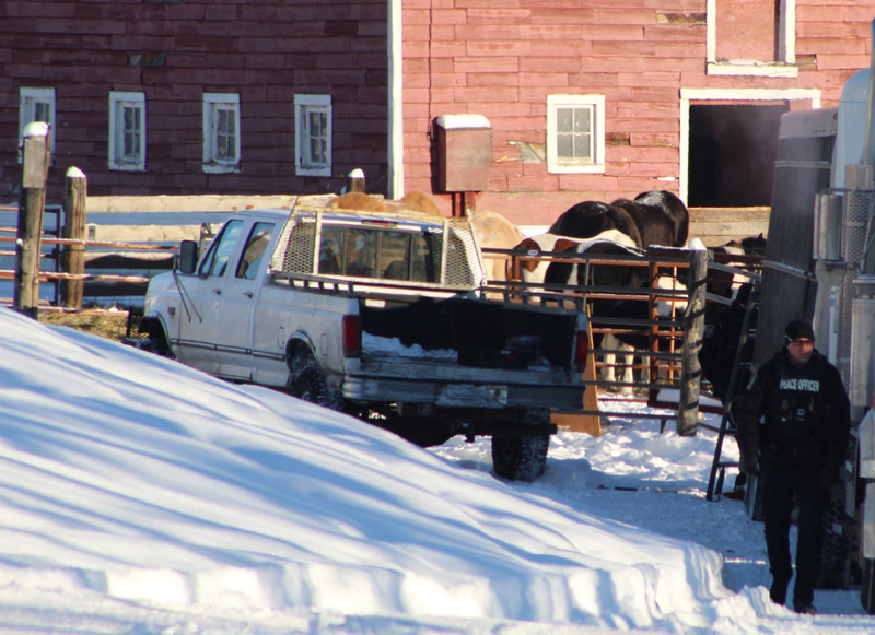 On January 8, 2019, officers removed dozens of horses from Patricia Moore's property. Photo courtesy of Brenda Belanger