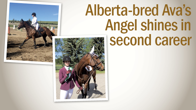 Thumbnail for OTTB: Ava's Angel Shines as a Jumper