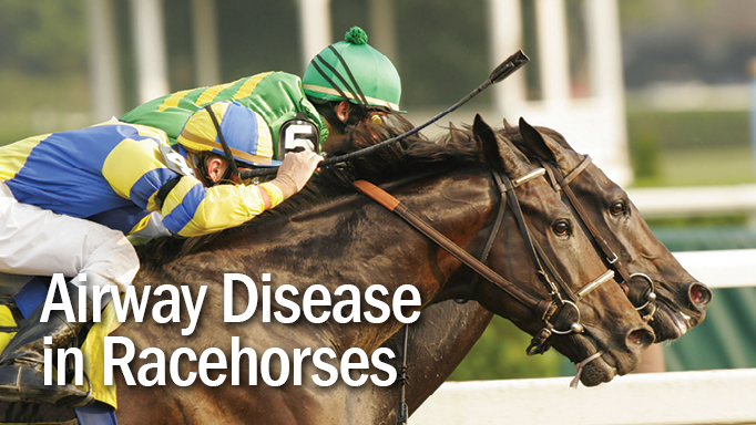 Thumbnail for Airway Disease is Prevalent in Racehorses