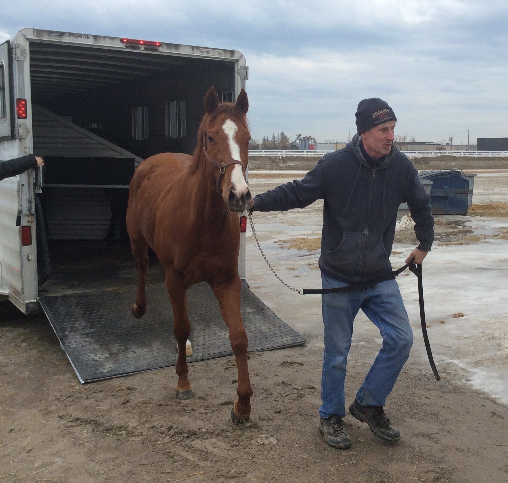 56cba8b2bcf HEDEMAN, a 3-year old by Old Forester, shipped in to Woodbine for trainer  Renee Kierans last week