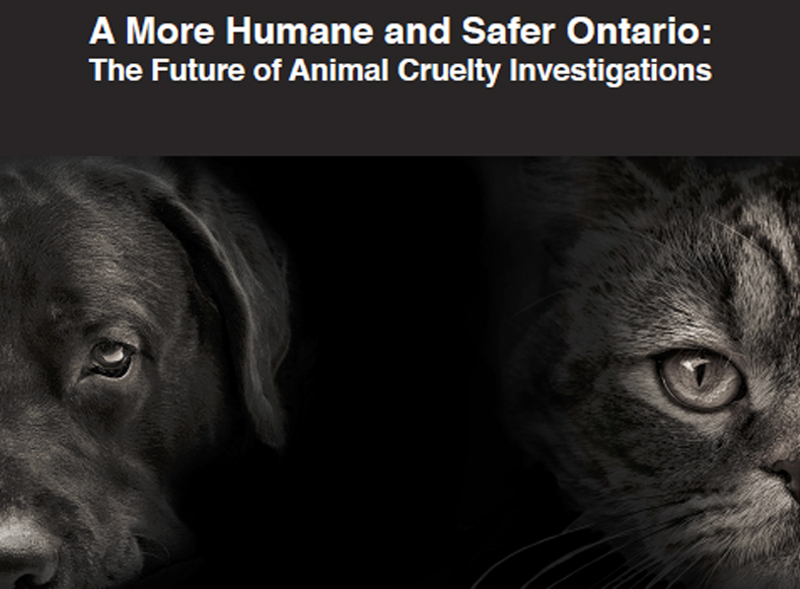 Thumbnail for New Ontario Animal Cruelty Investigations Report Released