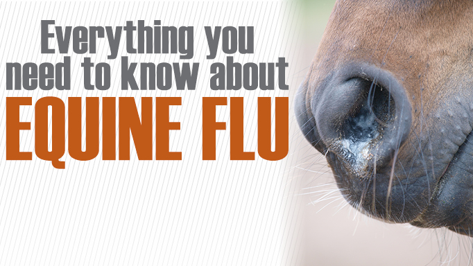 Thumbnail for Everything You Need to Know About Equine Influenza
