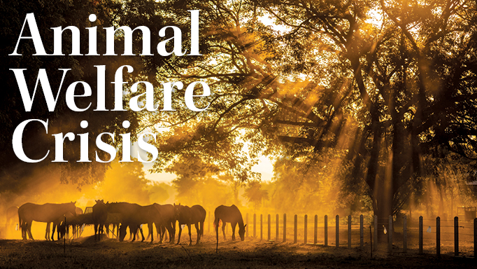Thumbnail for The Horse Welfare Crisis in Ontario and Beyond