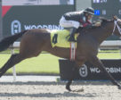 Intanga Rose winning on September 14, 2018 at Woodbine Racetrack.