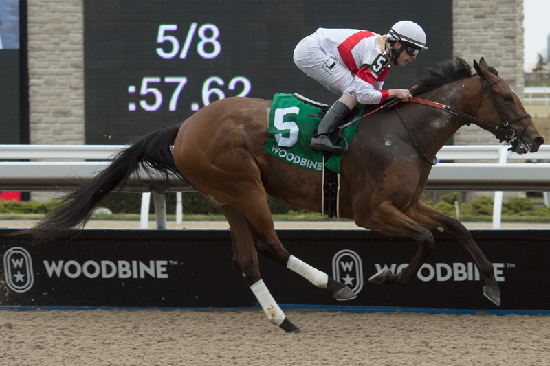 Sister Peacock and jockey Jesse Campbell winning the $100,000 Star Shoot Stakes on Sunday, April 21. Michael Burns Photo