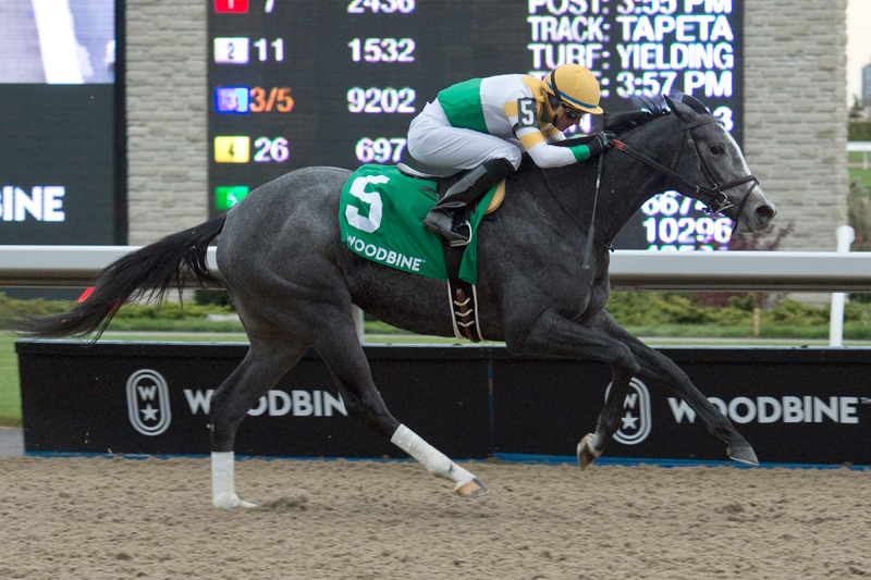 Bold Script winning the 2018 Princess Elizabeth Stakes at Woodbine Racetrack. Michael Burns Photo