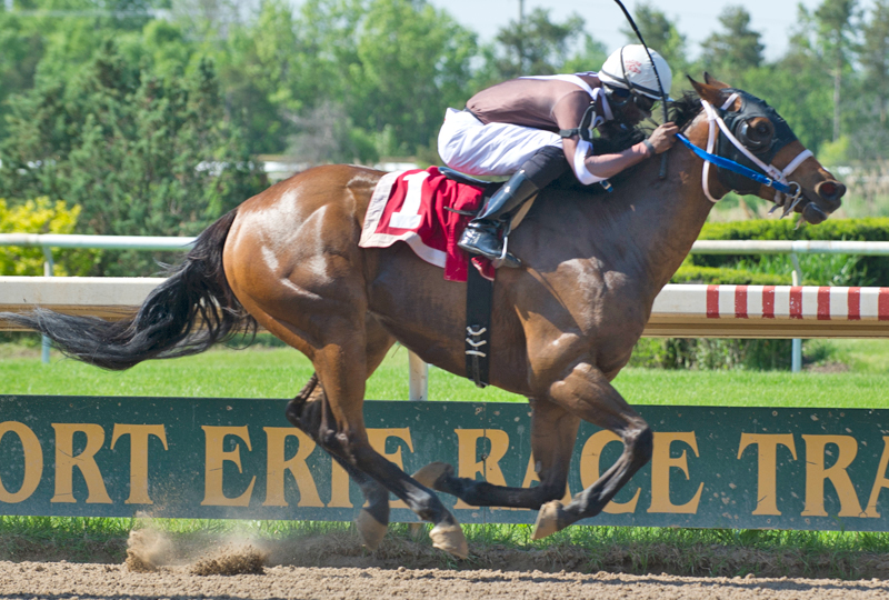 Flashy Margaritta and Kirk Johnson won the first race of the 2018 season at Fort Erie Race Track. Michael Burns Photo